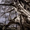 Image of Banyán — jeden strom sa stáva lesom - MAGAZÍN BOLD