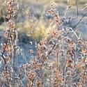 Image of Ide zima, bude mráz | Záhrada v kopci