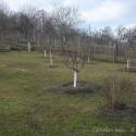 Image of Nezabudli sme na bielenie stromov | Záhrada v kopci