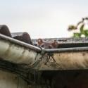 Image of Pozor na hlodavce vaute! Dokážu narobiť obrovské škody.  | Odpudzovače.sk