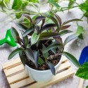 Image of Tipy na presádzanie izbových rastlín