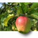 Image of Zázrak jménem jablko | Dobře a zdravě žít lehce